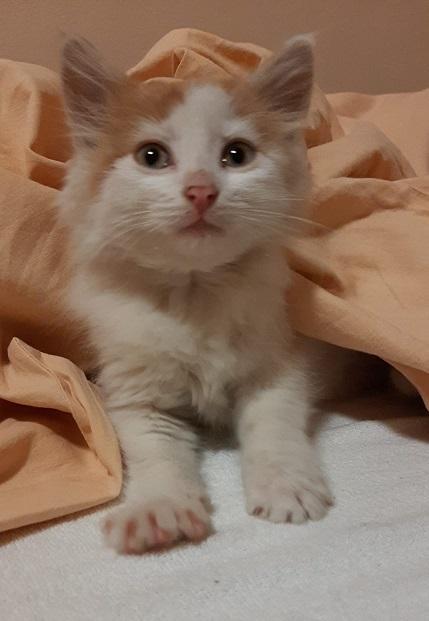 Powiat bialski.: Policjanci uratowali wychudzonego i przemoczonego kotka - Zdjęcie główne