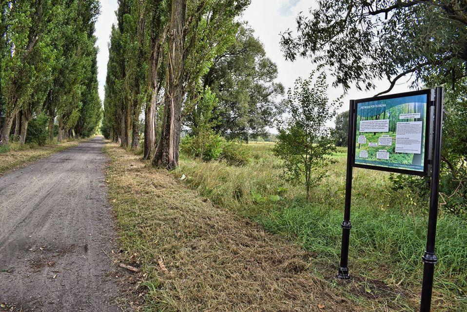 Ścieżka ekologiczna nad Wieprzem w Lubartowie - Zdjęcie główne