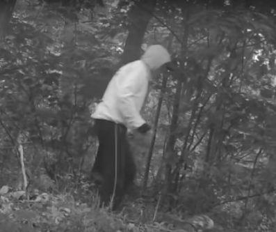 Kładł konary na drogach w Lasach Kozłowieckich. Kara co najwyżej.... grzywna - Zdjęcie główne