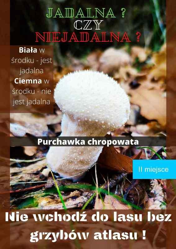 Sukces uczennicy RCEZ w konkursie o grzybach - Zdjęcie główne
