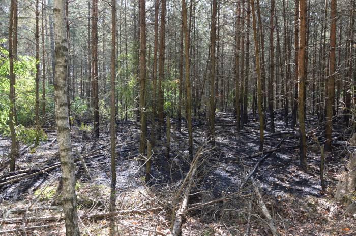 Strażacy nie są winni podpalania lasów - Zdjęcie główne