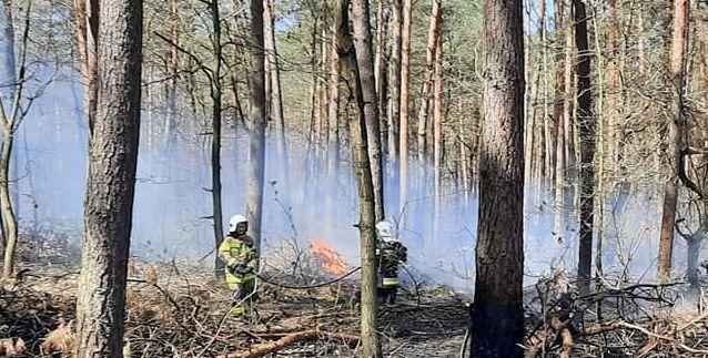Gmina Sosnowica: pożar ściółki leśnej  - Zdjęcie główne