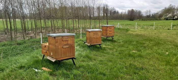 Dziecko uczyło się pszczelarstwa. Ukradli mu ul - Zdjęcie główne