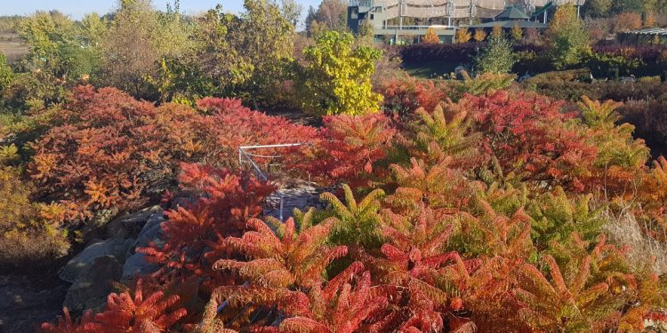 Złota jesień w Magicznych Ogrodach - Zdjęcie główne