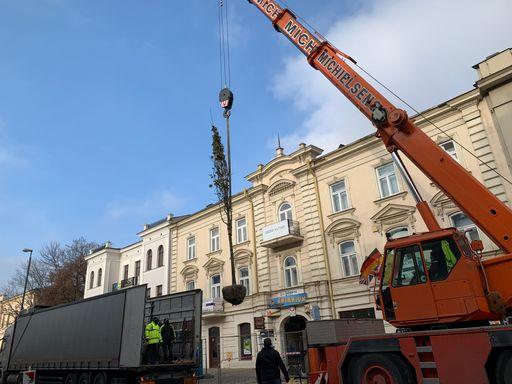 Urząd Miasta Lublin sadzi nowe drzewa w centrum - Zdjęcie główne