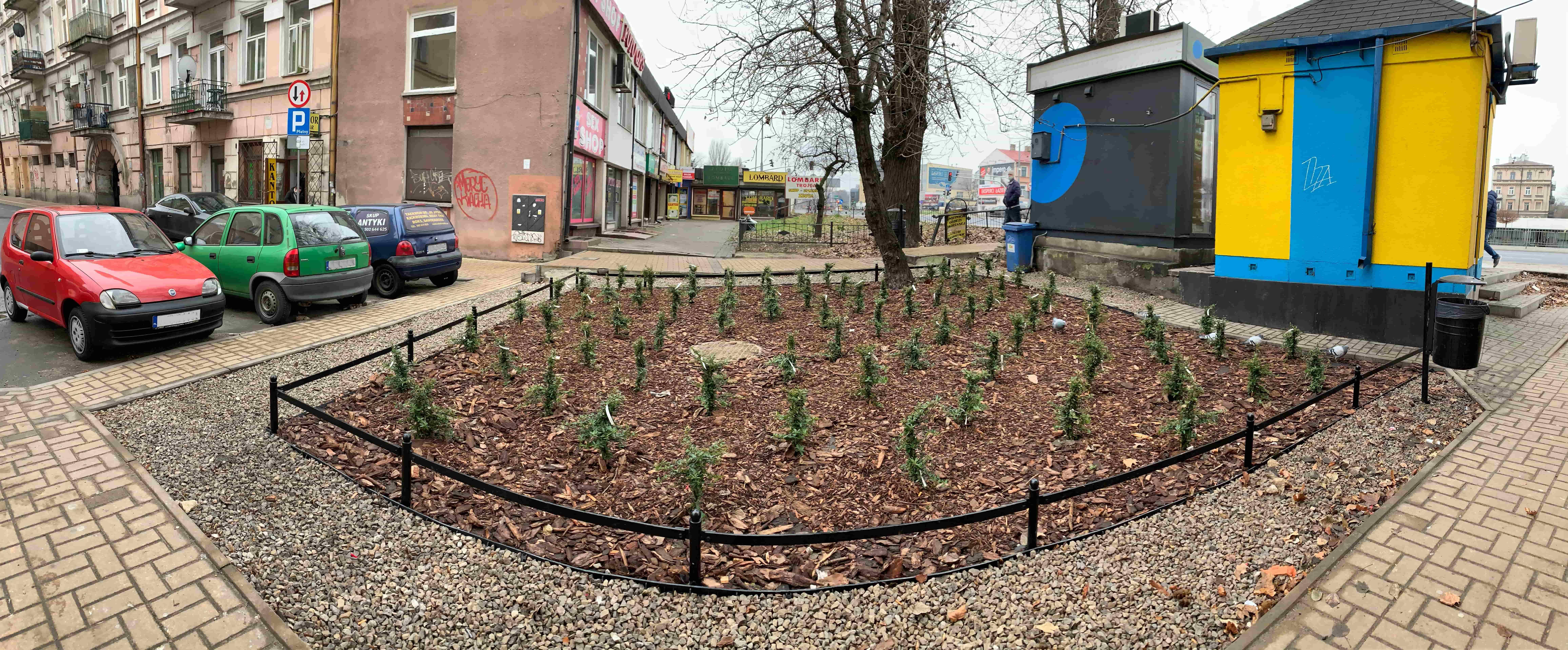 Przy ul. Jezuickiej w Lublinie są nowe krzewy - Zdjęcie główne