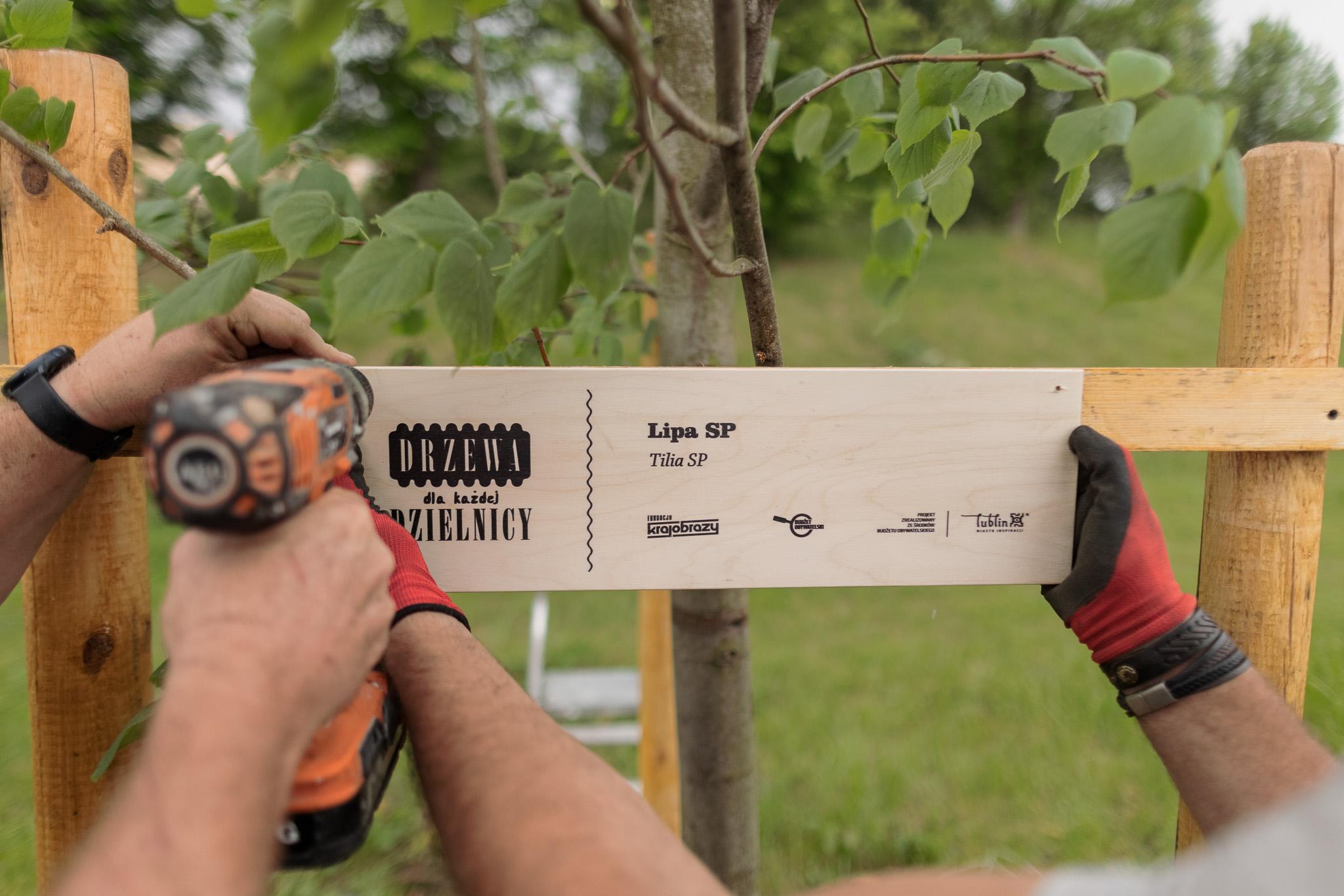 Lublin: Mieszkańcy kończą sadzić drzewa w dzielnicach. W ramach Budżetu Obywatelskiego - Zdjęcie główne