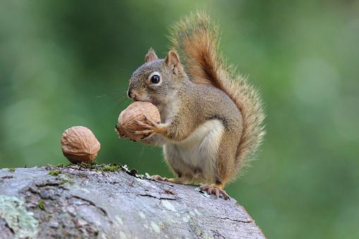 Lublin: Posadzą nowe drzewa w Ogrodzie Saskim? Specjalnie dla wiewiórek - Zdjęcie główne