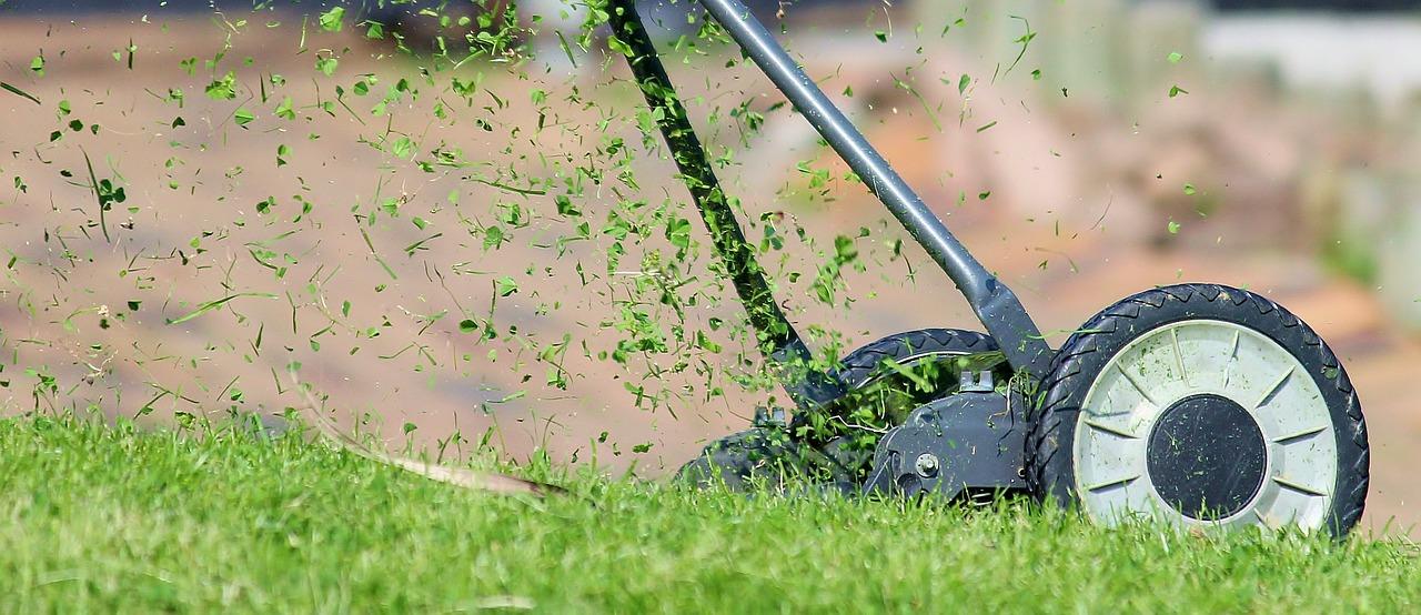Lubelski radny prosi miasto o dokładniejsze dbanie o zieleń. Ratusz informuje, że trzyma rękę na pulsie. - Zdjęcie główne