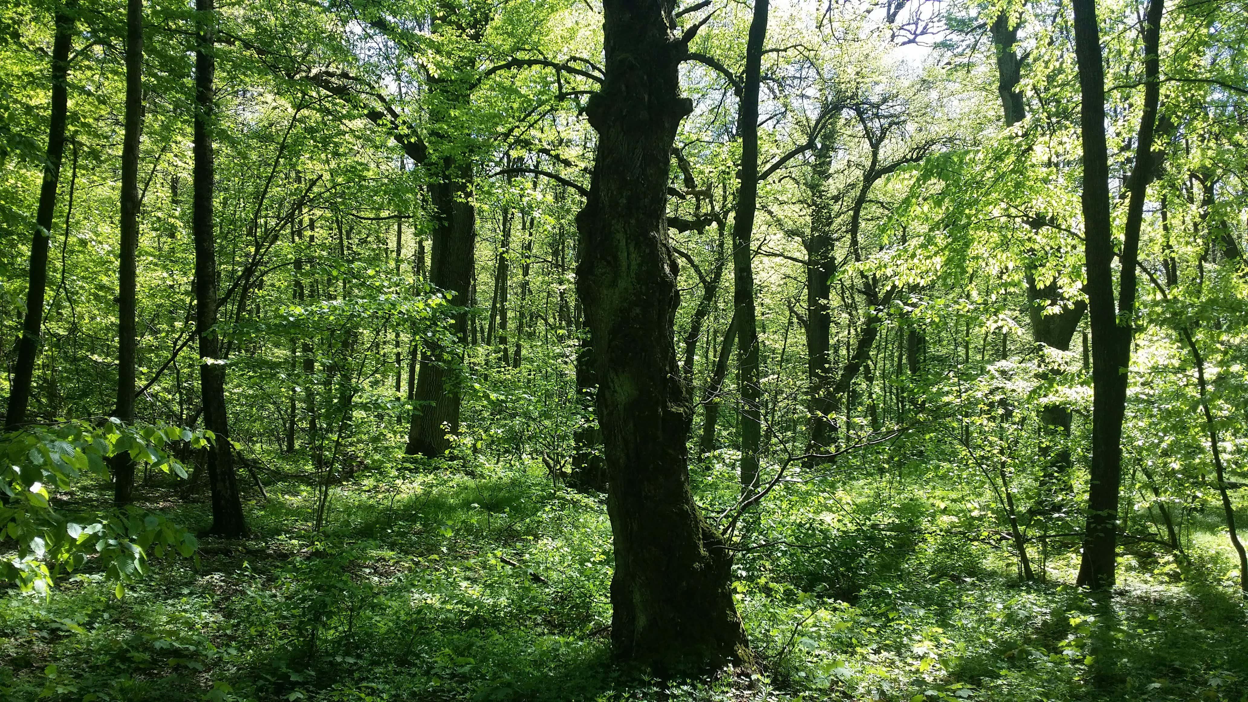 Co dalej z wycinką lubelskich lasów? Zareagował prezydent Żuk i aktywiści - Zdjęcie główne
