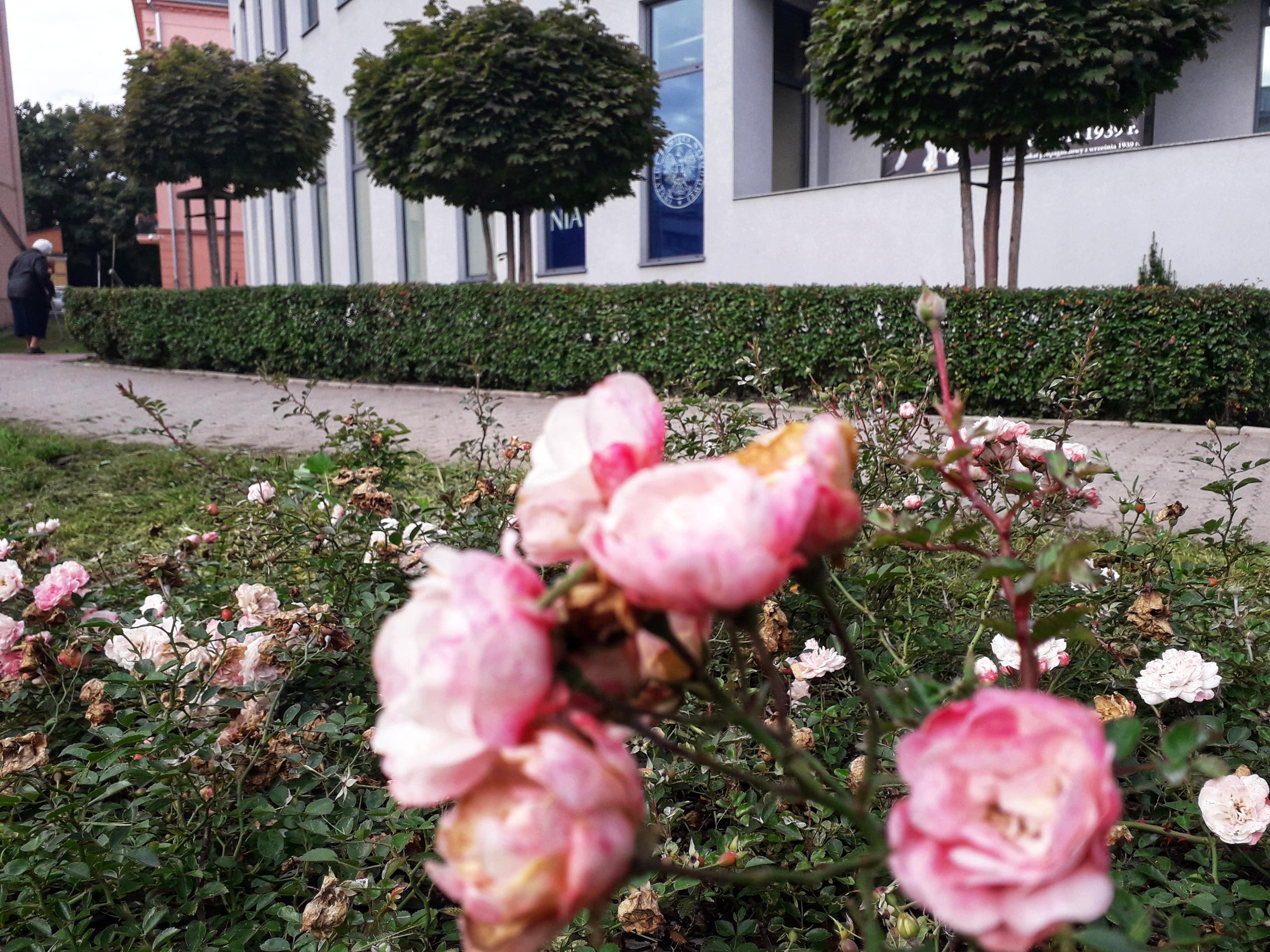 Lublin: Zasadzą nowe drzewa, krzewy i kwiaty w mieście - Zdjęcie główne