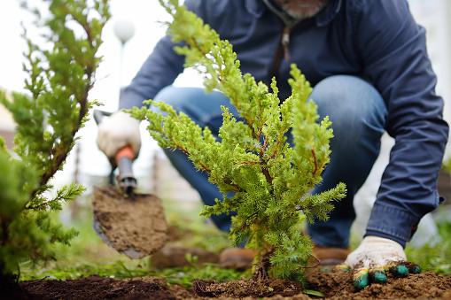 Miasto Lublin chce zasadzić ok. 1000 drzew. Ogłoszono konkurs - Zdjęcie główne