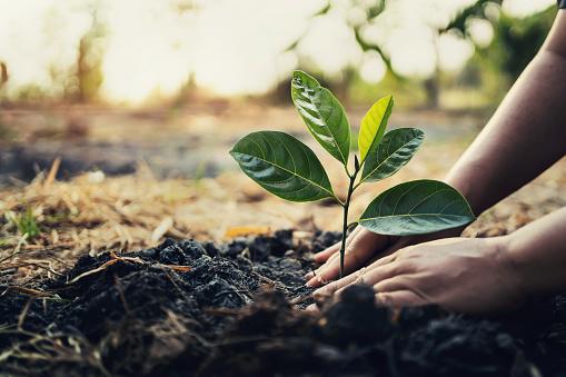 W Lublinie będzie ponad tysiąc nowych drzew  - Zdjęcie główne