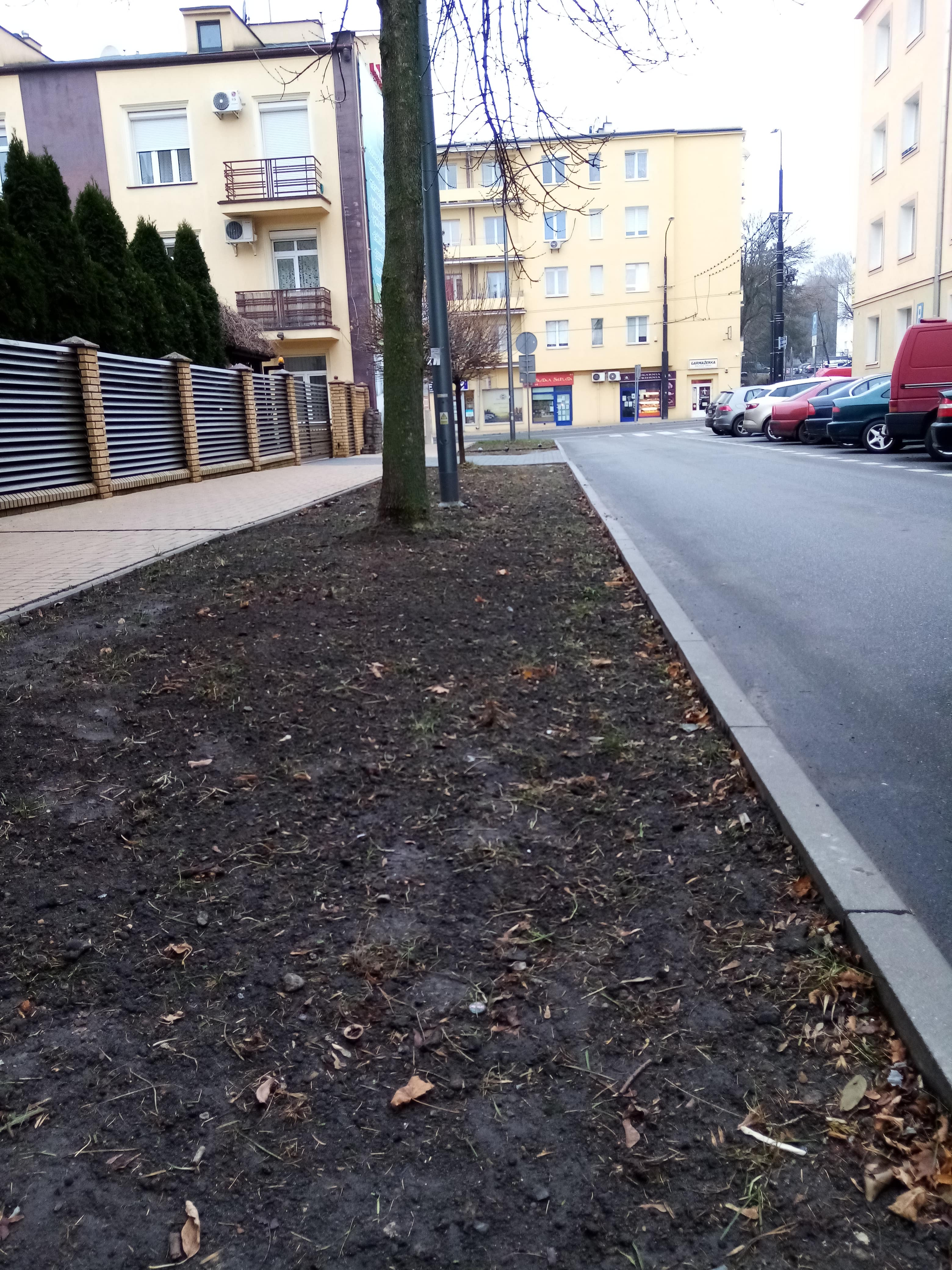 Lublin ma być bardziej zielony. Wykonano nasadzenia i uporządkowano zieleń - Zdjęcie główne