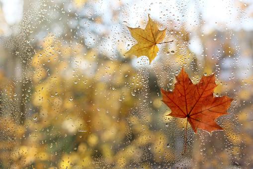 Pogoda w Twojej okolicy. Prognoza na weekend 18 - 19 września. - Zdjęcie główne