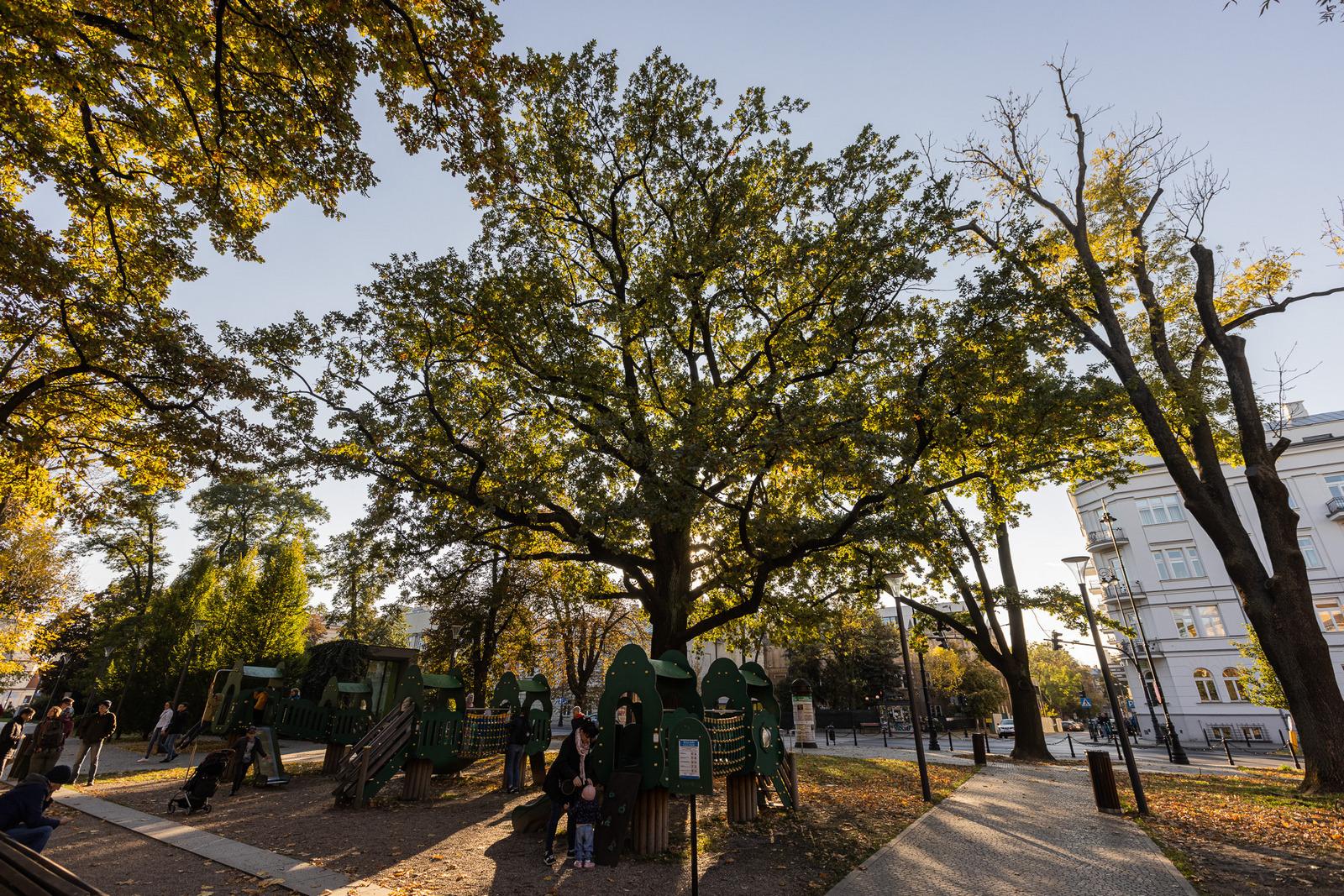 Lublin: Pojawią się kolejne pomniki przyrody w mieście - Zdjęcie główne