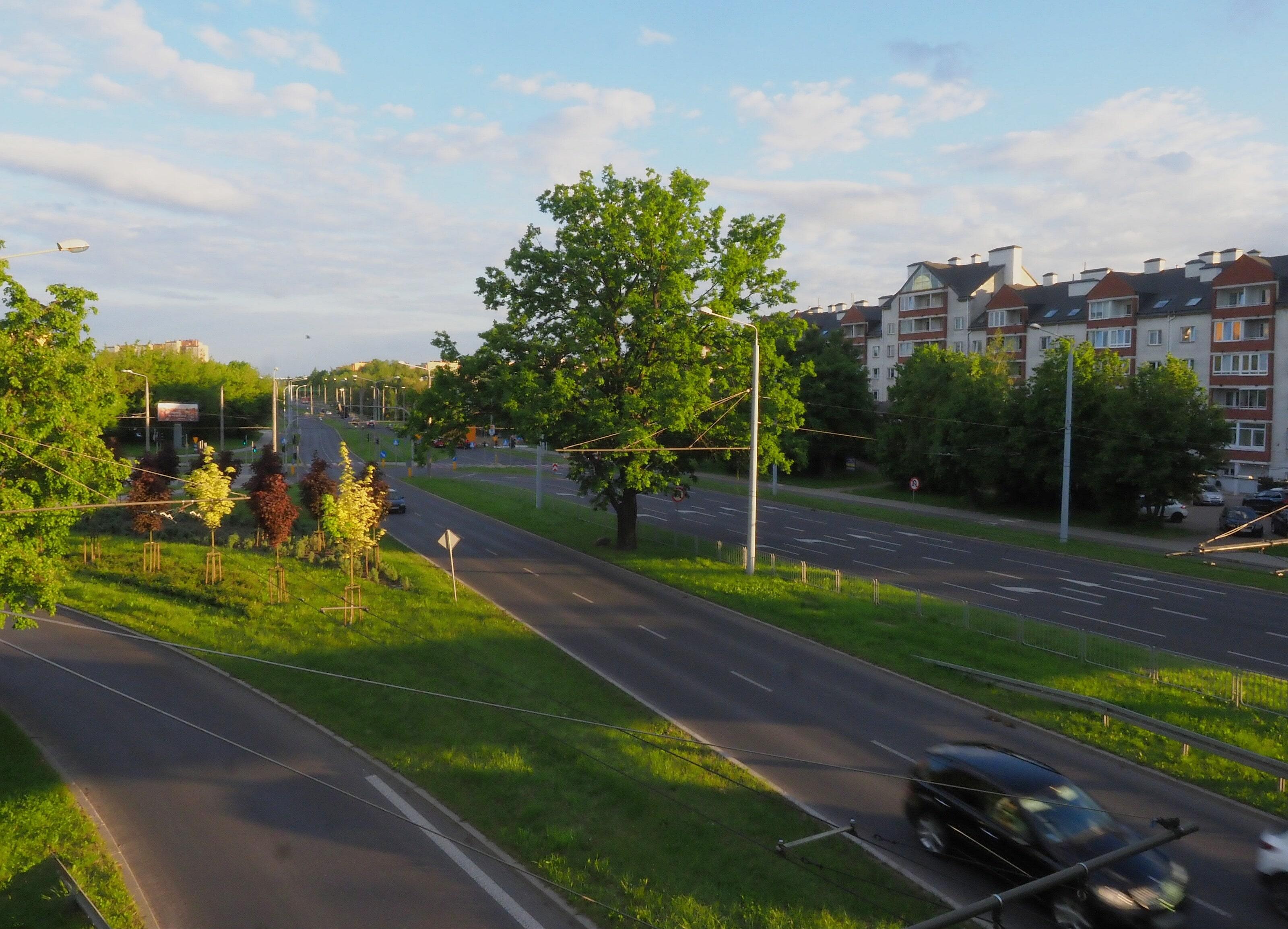 Lublin: dąb z ul. Bohaterów Monte Cassino w konkursie Drzewo Roku 2021. Trwa głosowanie - Zdjęcie główne