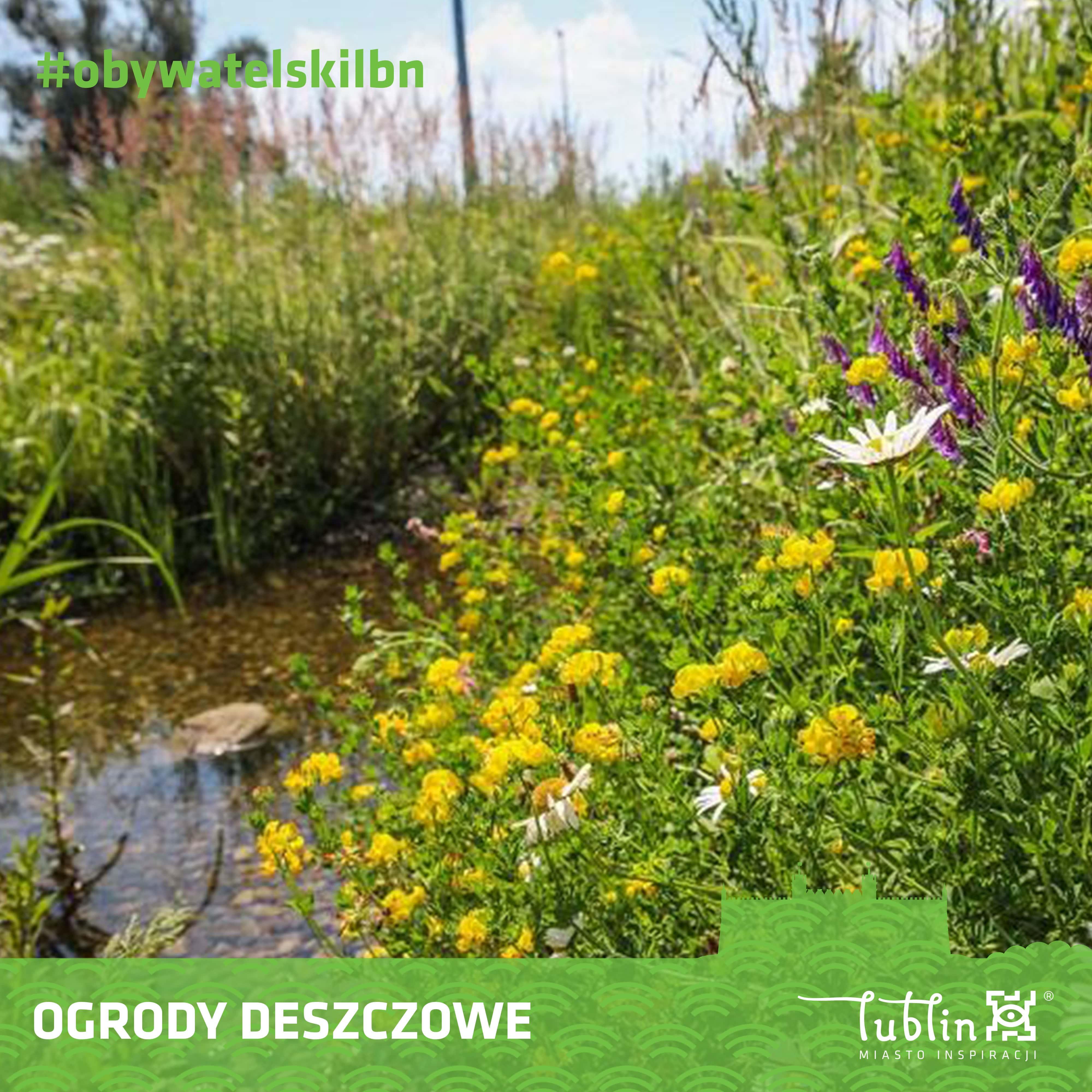 W Lublinie powstaną ogrody deszczowe. Trwa nabór ofert - Zdjęcie główne