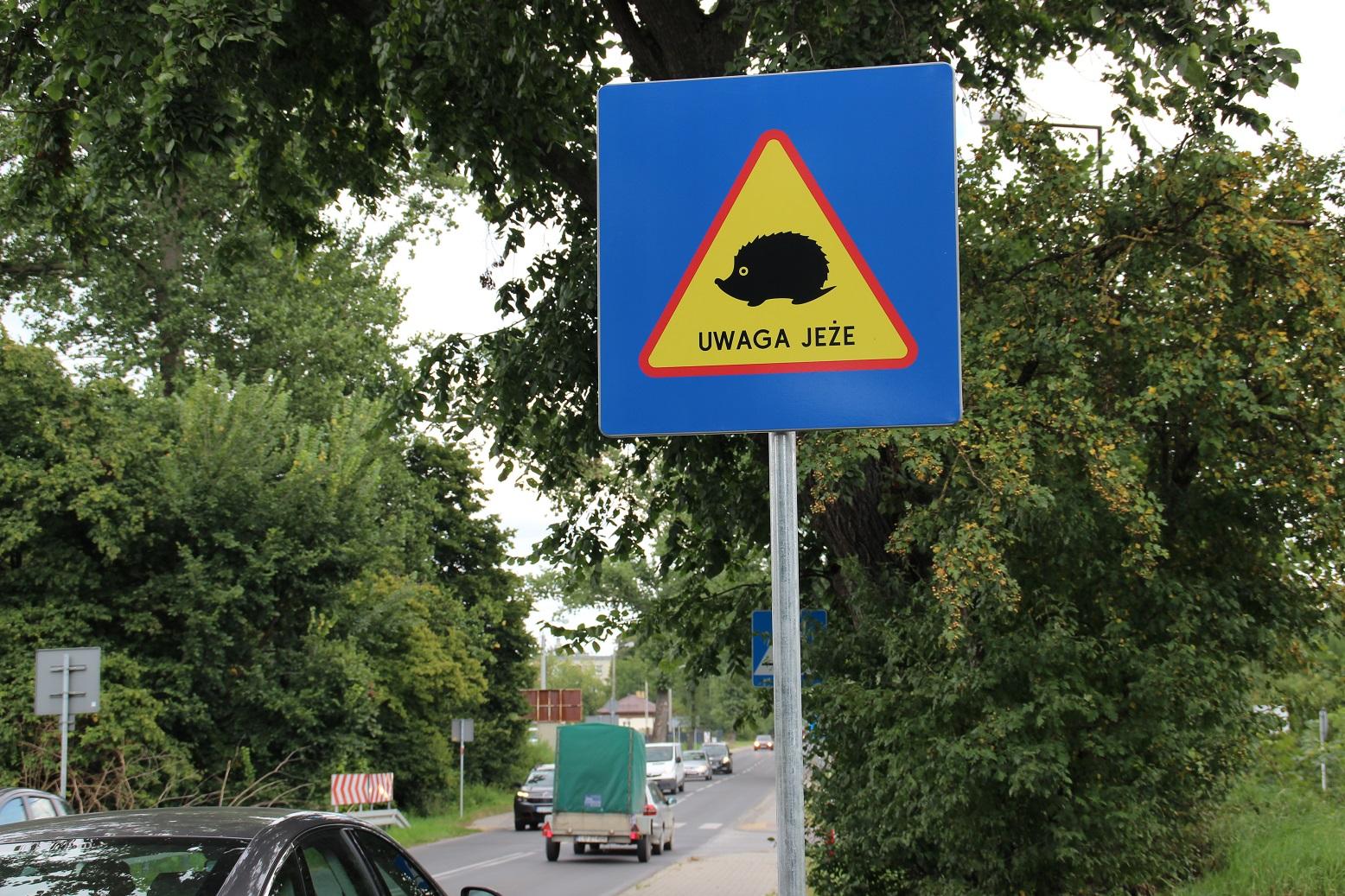 """Lublin: Znaki """"Uwaga jeże"""" będą ostrzegać kierowców. Zwierzęta często wędrują przez ulice - Zdjęcie główne"""