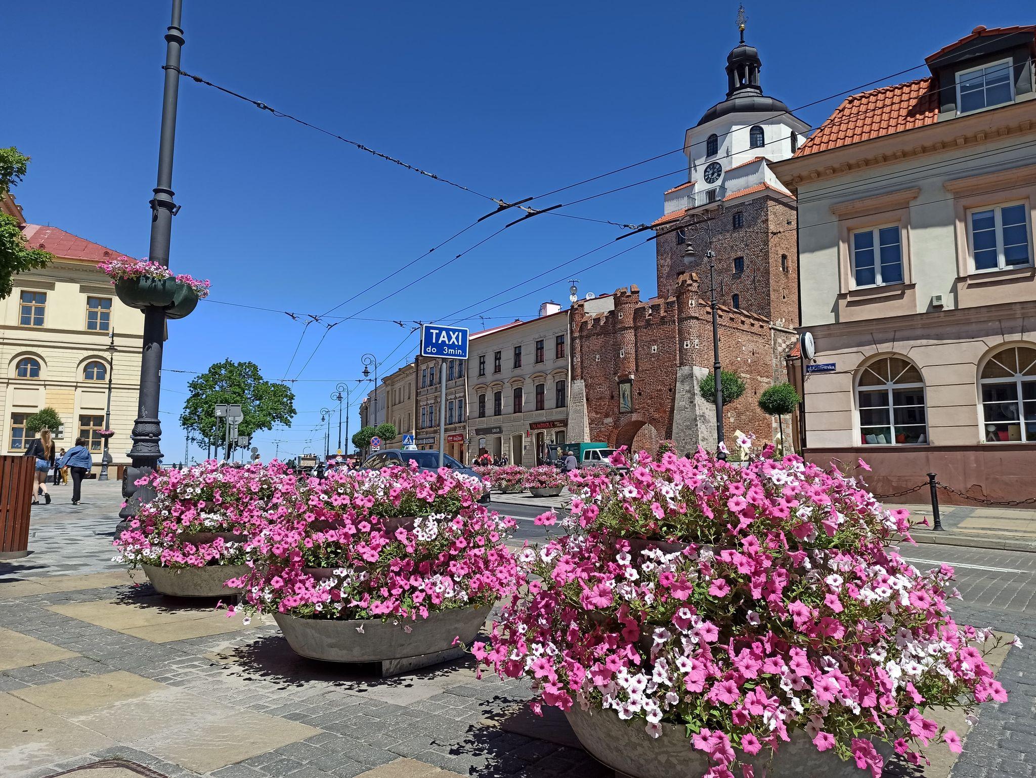 Lublin: Ratusz wymienia kwiaty. Mają zdobić miasto do jesieni - Zdjęcie główne