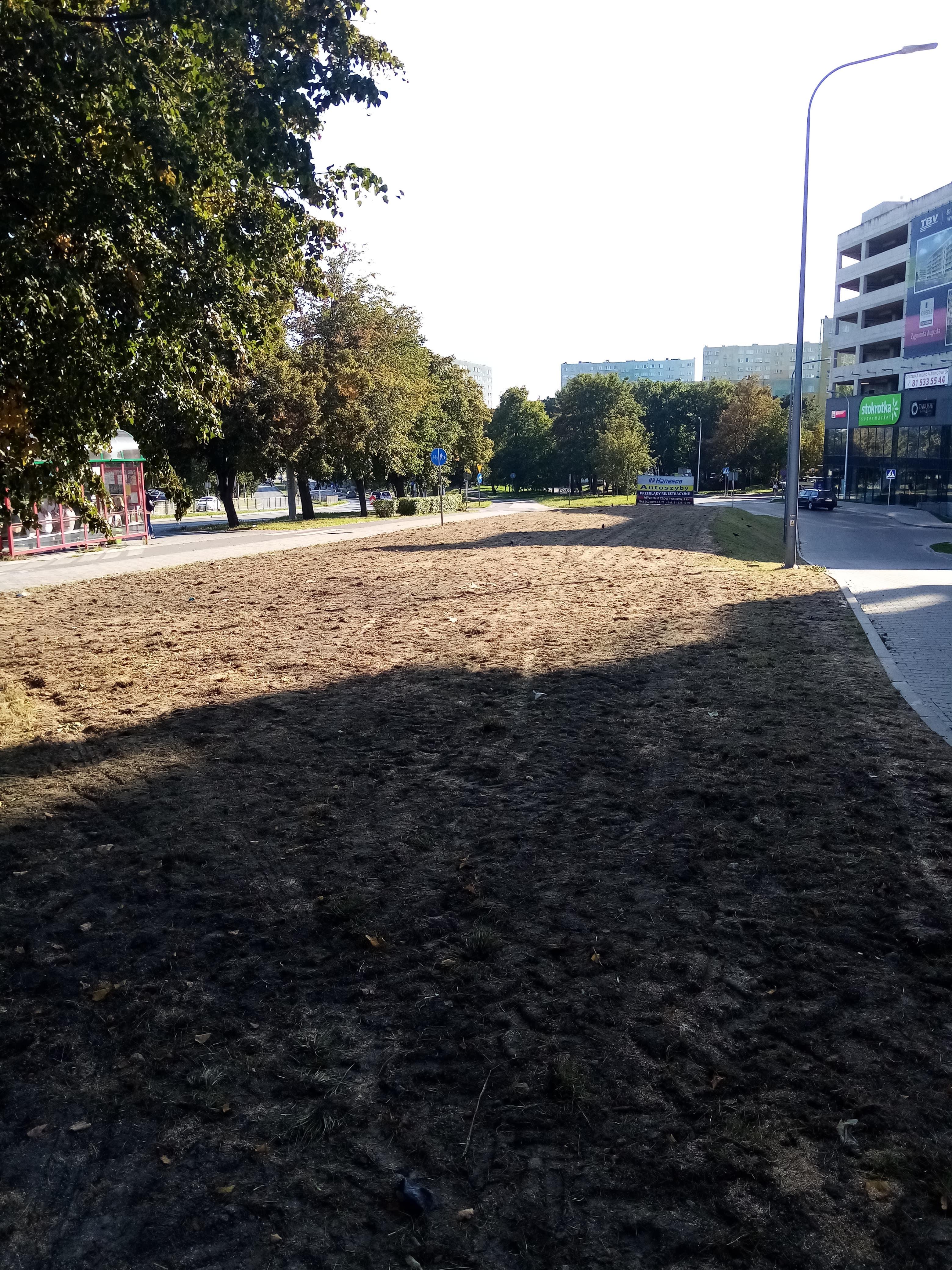 W Lublinie wysiano murawy z różnych gatunków traw - Zdjęcie główne