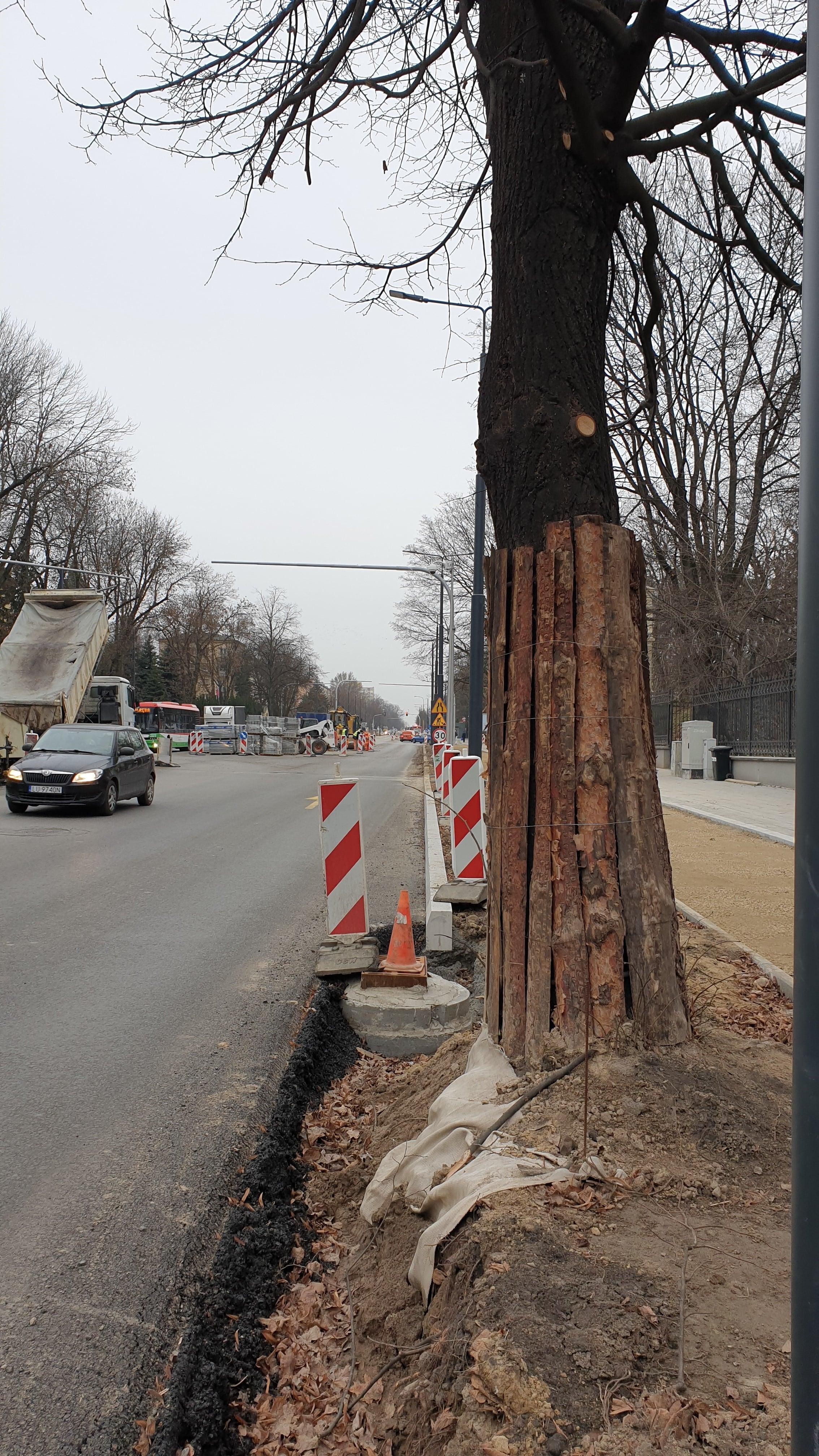Przebudowa Al. Racławickich. Lubelski Ratusz wytnie więcej drzew - Zdjęcie główne