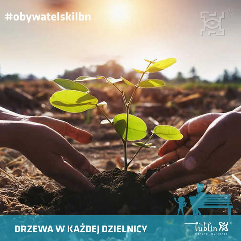 Miasto Lublin zasadzi ok. tysiąc drzew - Zdjęcie główne