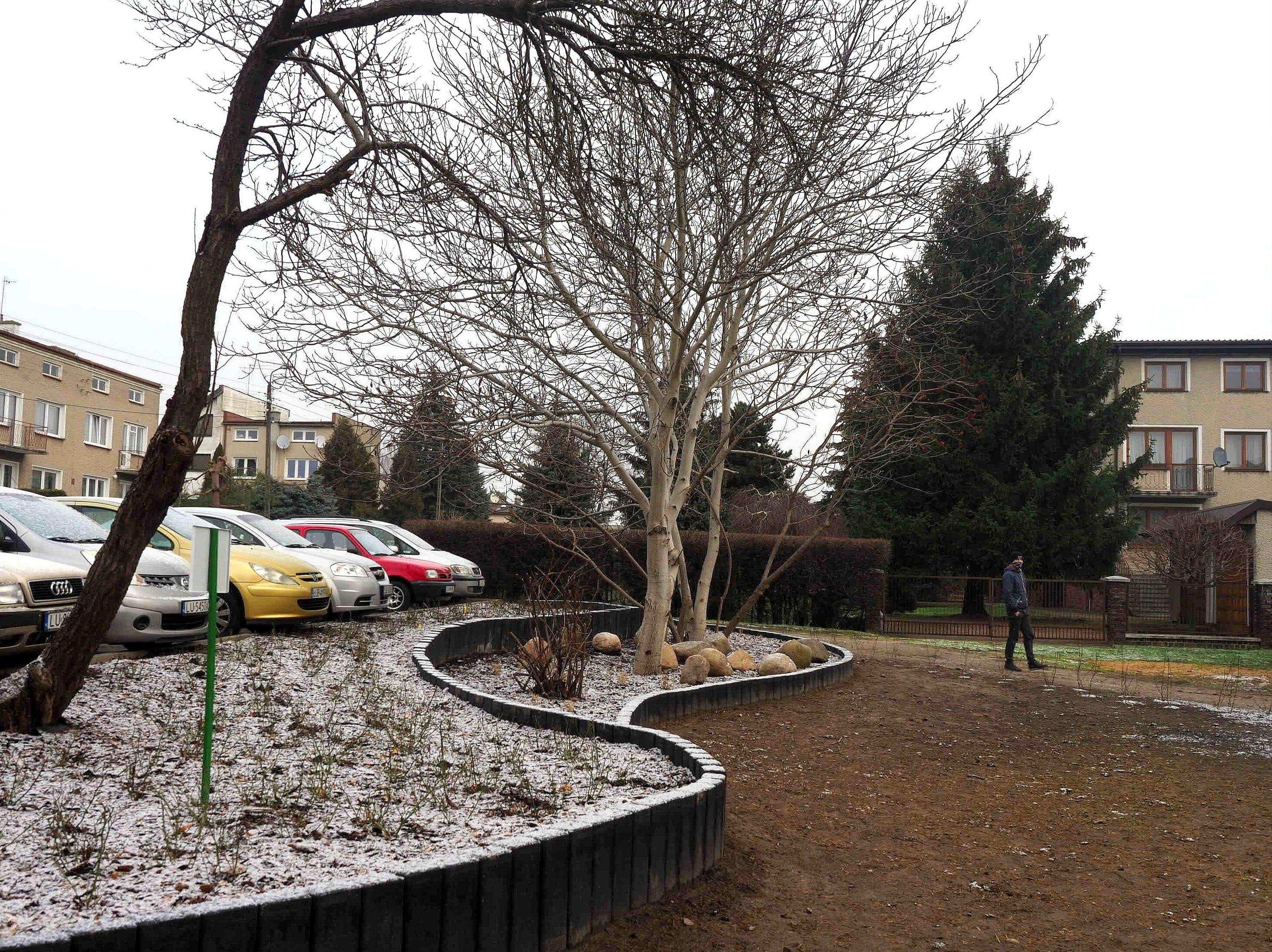 W Lublinie zasadzono ponad 1,1 tys. drzew - Zdjęcie główne