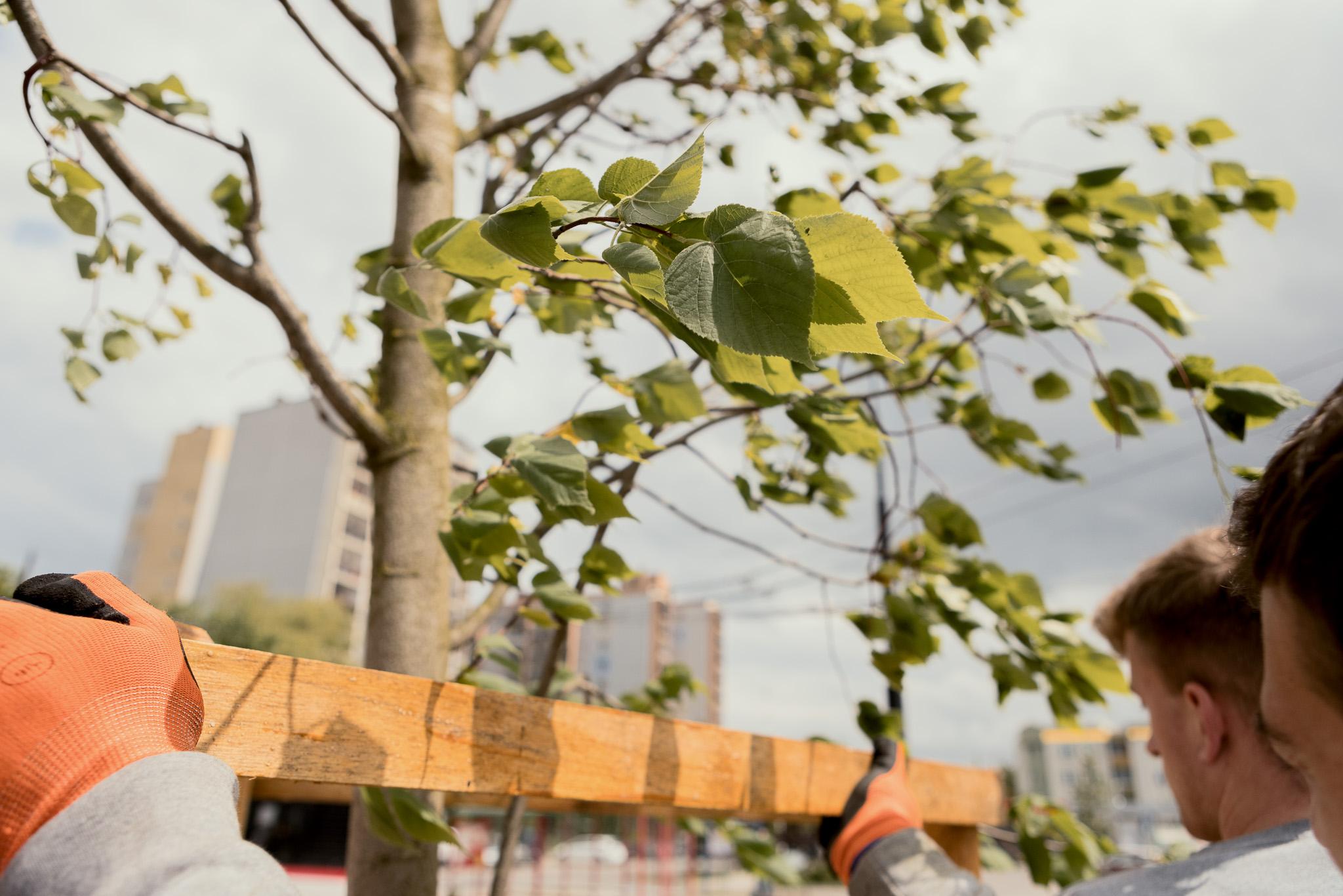 Lublin: dalszego sadzenia drzew w dzielnicach na razie nie będzie. Przeszkodziła pogoda - Zdjęcie główne