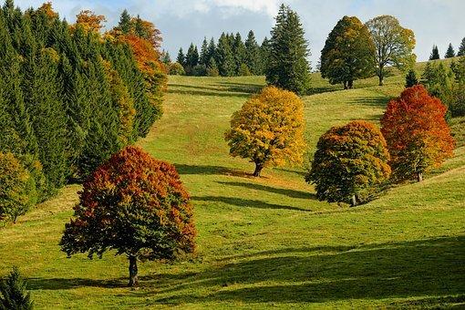 Pogoda w Twojej okolicy. Prognoza na poniedziałek 4 października - Zdjęcie główne