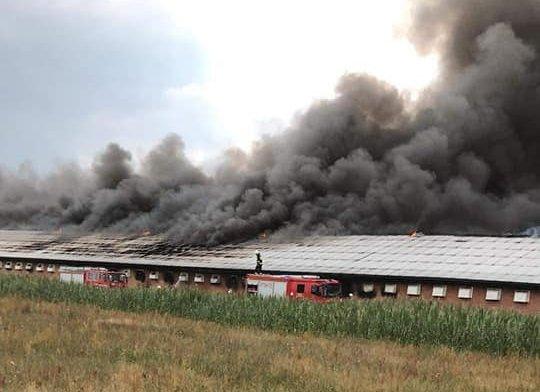 W Zofiborze płonął kurnik o długości 145 metrów. Straty ok.2,5 mln zł - Zdjęcie główne