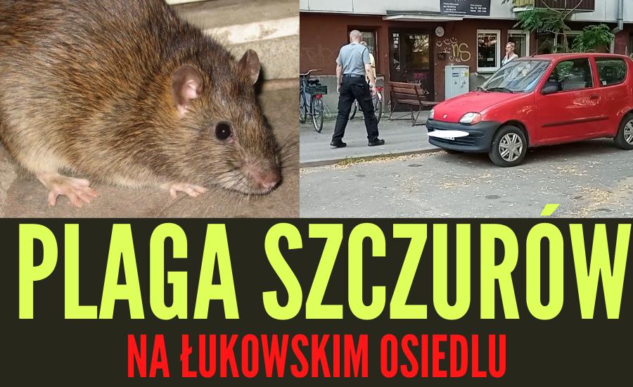 Plaga szczurów na łukowskim osiedlu (WIDEO) - Zdjęcie główne