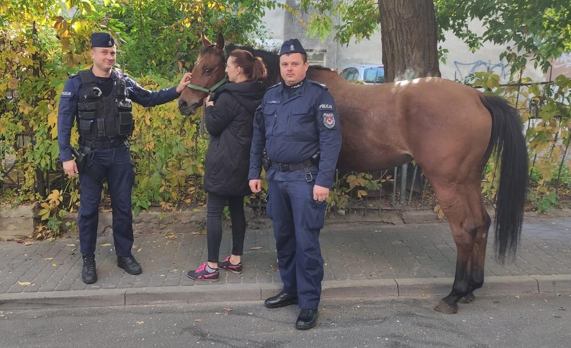 Lublin: Przez centrum miasta galopował koń. Schwytała go policja - Zdjęcie główne