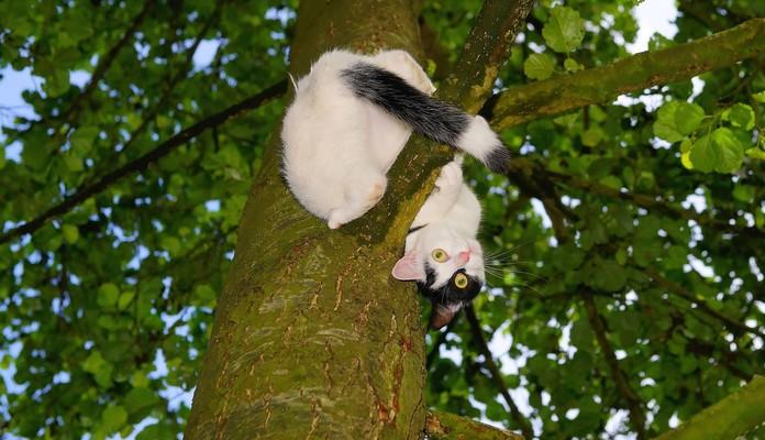 Spędził na drzewie 2 dni - Zdjęcie główne