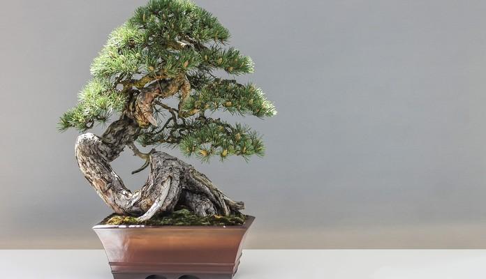 Chciał opchnąć drzewka za małą cenę - Zdjęcie główne