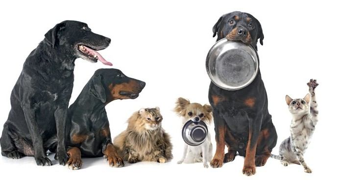 Uczniowie SP nr 6 zbierają karmę dla zwierzaków - Zdjęcie główne