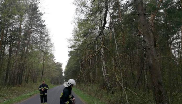 Niebezpieczny konar drzewa zwisał nad jezdnią - Zdjęcie główne