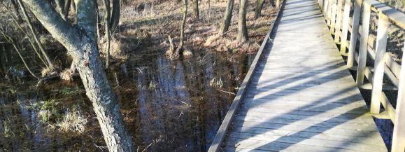 Zakaz wejścia do lasów. Zamknięty Poleski Park Narodowy  - Zdjęcie główne