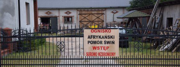 Pięć świń zakażonych ASF w Bekieszy - Zdjęcie główne